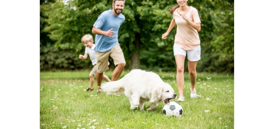dogs playing with soccer balls - kick and click